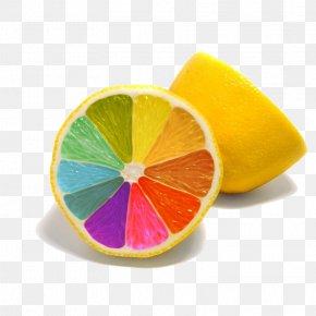 Colorful Oranges - Lemon Colorful Rainbow Desktop Wallpaper High-definition Television 1080p PNG