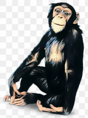 Chimpanzee Gorilla Human Behavior Monkey PNG