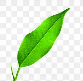Leaf - Leaf Google Images Wallpaper PNG