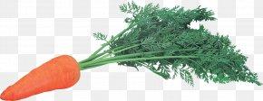 Carrot Image - Carrot Leaf Vegetable Herb Natural Foods PNG