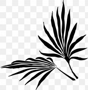 Palm Trees Palm Branch Clip Art Leaf PNG