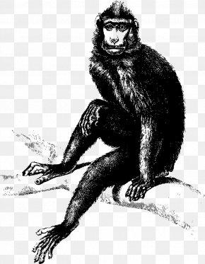 Monkey - Monkey Ape Common Chimpanzee Clip Art PNG