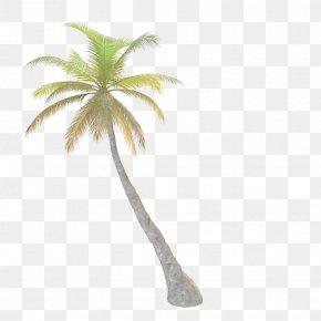 Palm Tree - Tree Arecaceae Leaf PNG