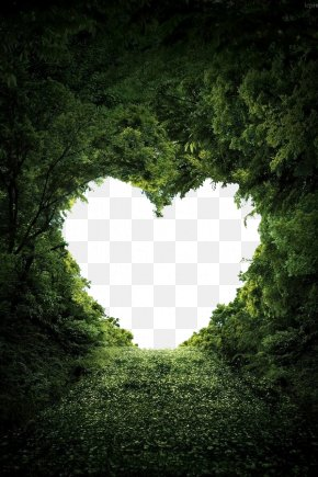 Love - Heart Nature Valentine's Day Love Wallpaper PNG