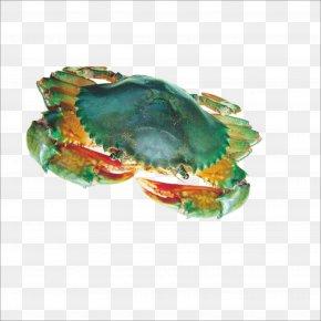 Crab - Yangcheng Lake Crab Seafood Hot Pot Hoo Hey How PNG