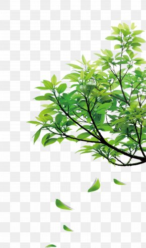 Natural Green Leaves - Clip Art PNG