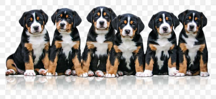 Greater Swiss Mountain Dog Entlebucher Mountain Dog Dog