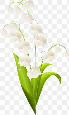 Lily Of The Valley - Lily Of The Valley Stock Photography Clip Art PNG
