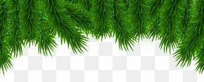 Christmas Pine Border Clip Art - Christmas Pine Clip Art PNG