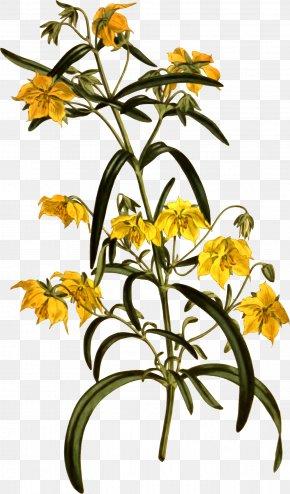Flower - Floral Design Clip Art Cut Flowers Openclipart PNG