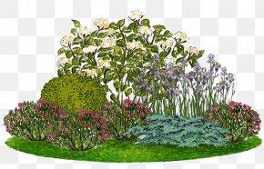 English Landscape Garden - Smooth Hydrangea Flower Garden Panicled Hydrangea Ornamental Plant PNG