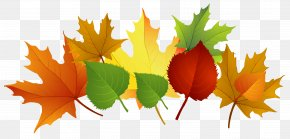 Fall Leaves Clipart - Autumn Leaf Color Clip Art PNG