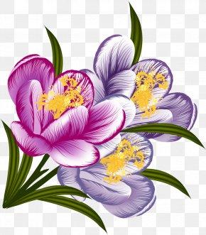 Crocus - Flower Floral Design Watercolor Painting Clip Art PNG