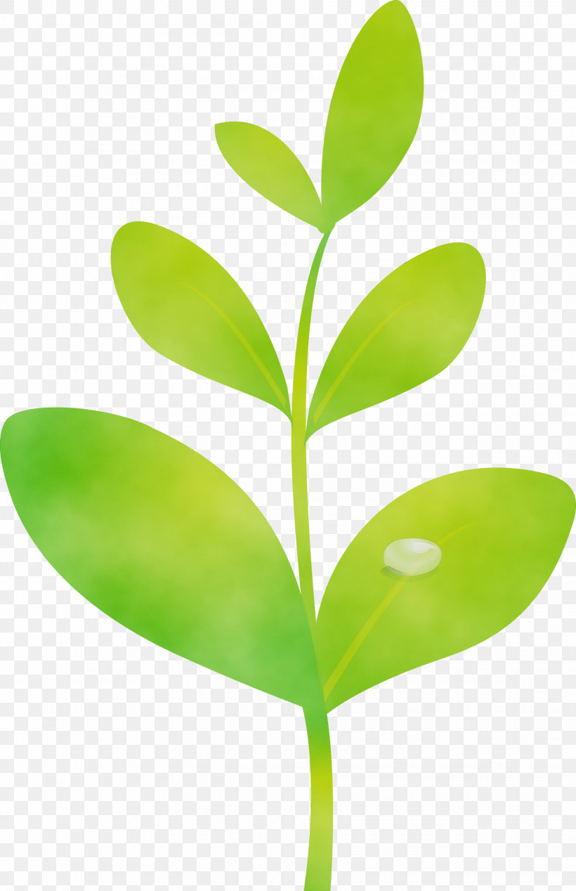 Leaf Green Plant Flower Plant Stem, PNG, 1940x3000px, Sprout, Bud, Flower, Flush, Green Download Free