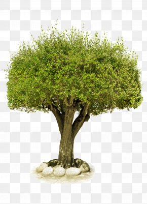 Tree Image, Free Download, Picture - Image File Formats PNG