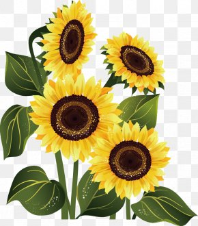 Sunflower - Stock Photography Common Sunflower PNG