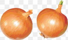 Onion Image - Yellow Onion Shallot Calabaza Vegetarian Cuisine Pumpkin PNG