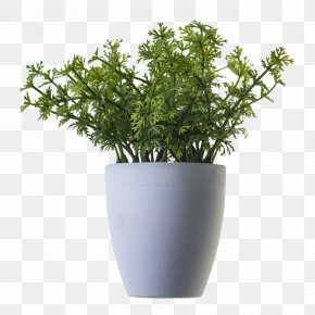 Plant - Houseplant Tree PNG