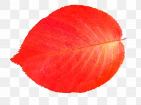 Leaf - Leaf Download Illustration PNG