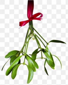 Christmas Transparent Picture - Mistletoe Phoradendron Tomentosum Christmas Clip Art PNG