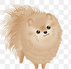 Puppy Pictures - Pomeranian Dog Breed Puppy Non-sporting Group PNG