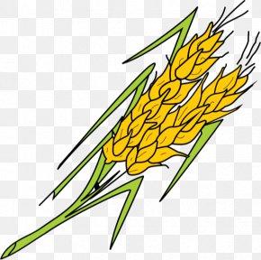Leaf - Grasses Plant Stem Leaf Commodity Clip Art PNG