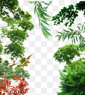 Creative Background Green Trees - Tree Icon PNG