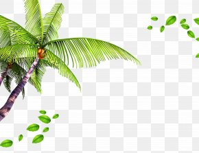 Coconut Palm Leaves Background - Template Beach PNG