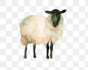 Goat - Icelandic Sheep Watercolor Painting Drawing Goat Sketch PNG