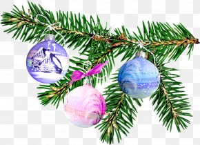 Spruce - Old New Year Blog Holiday Christmas Ornament PNG