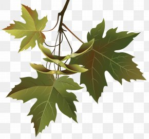 Autumn Leaves Branch Clipart Image - Leaf Branch Tree Clip Art PNG