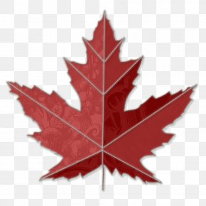 Maple Leaf Image - Canada Sugar Maple Toronto Maple Leafs Clip Art PNG
