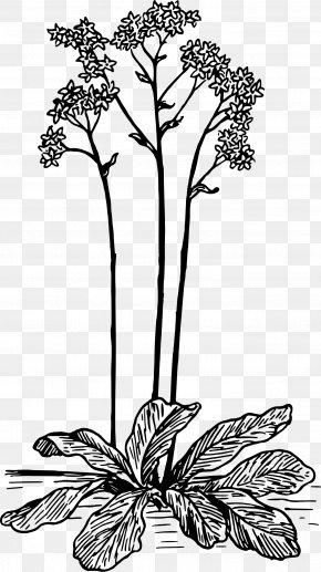 Design - Floral Design Cut Flowers Flowering Plant Monochrome PNG