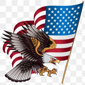 American Eagle Cliparts - United States Bald Eagle American Eagle Outfitters Stock.xchng Clip Art PNG