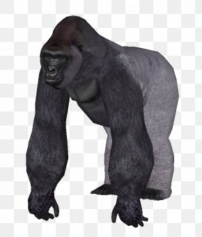 Gorilla - Zoo Tycoon 2 Common Chimpanzee Western Lowland Gorilla Primate Orangutan PNG