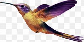 Bird - Hummingbird PNG