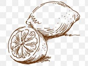 Vector Lemon Sketch - Euclidean Vector Vecteur Lemon PNG