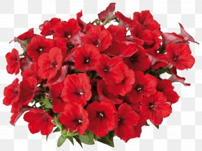 Flower - Petunia Surfinia Flower Annual Plant Color PNG