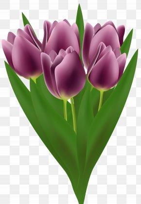 Tulips Bouquet Transparent Clip Art Image - Flower Bouquet Tulip Clip Art PNG