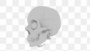 Human Skull - Skull Dental Implant Dentistry Dental Public Health Dental Braces PNG