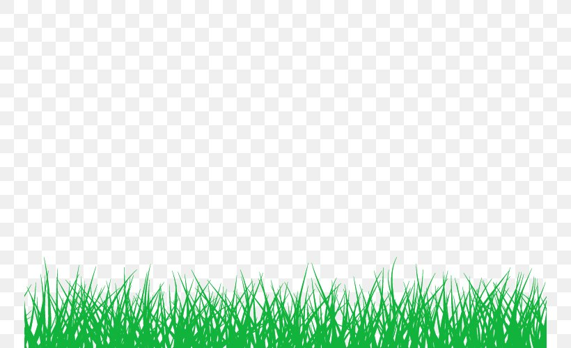 Bamboo Information Lawn, PNG, 750x500px, Bamboo, Field, Grass, Grass Family, Grasses Download Free