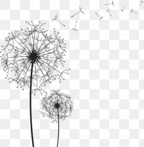 Black And White Line Drawing Vector Dandelion PNG