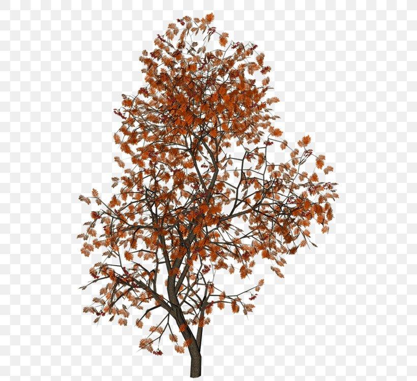 Twig 3D Computer Graphics Clip Art, PNG, 600x750px, 3d Computer Graphics, Twig, Arecaceae, Branch, Computer Graphics Download Free