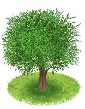 Tree - Tree Green Clip Art PNG