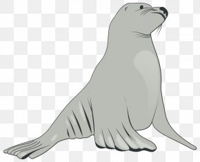 Sea Animals - Sea Lion Pinniped Clip Art PNG