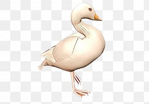 Livestock Snow Goose - Snow Background PNG