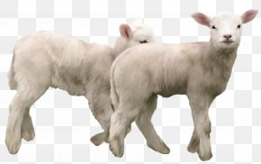 Lambs Clipart Picture - Goat Sheep Clip Art PNG