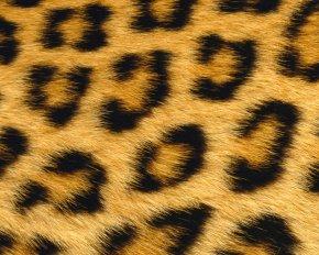 Leopard - Giraffe Leopard Skin Animal Fur PNG