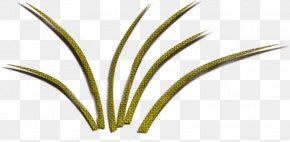 Green Grass - Leaf Grasses Plant Stem Green PNG