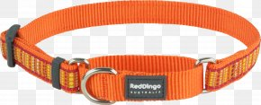 Dog - Dog Collar Dog Collar Dingo Martingale PNG